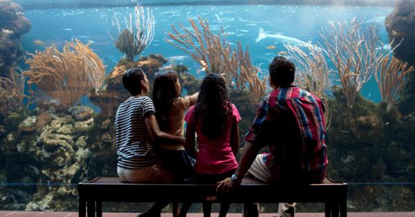 family time in april in bermuda aquarium