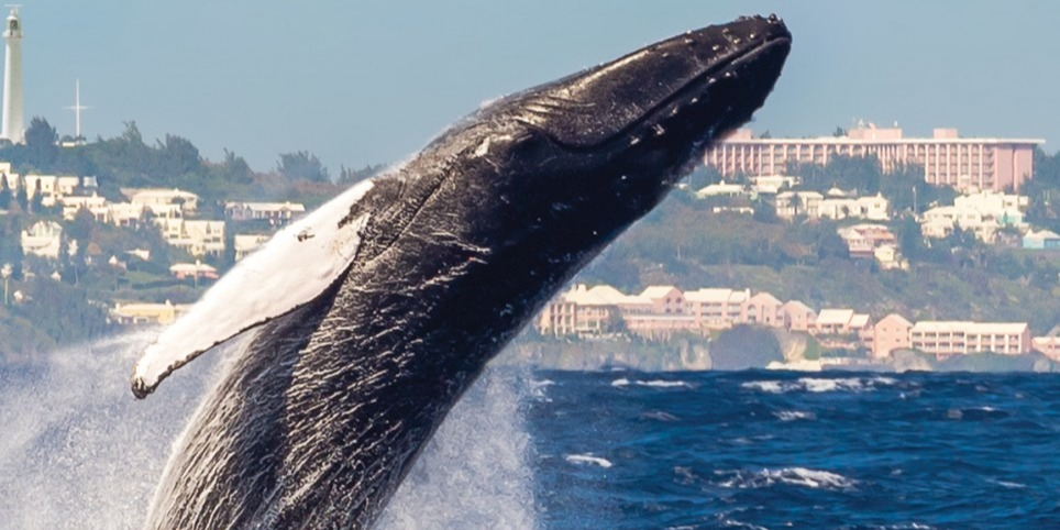 ber-whalewatching