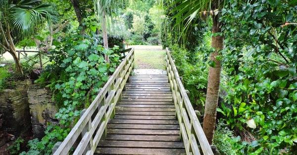 arboretum-railway-trail-in-bermuda-in-july