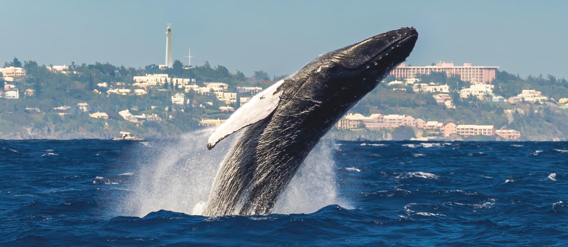 whale@2x